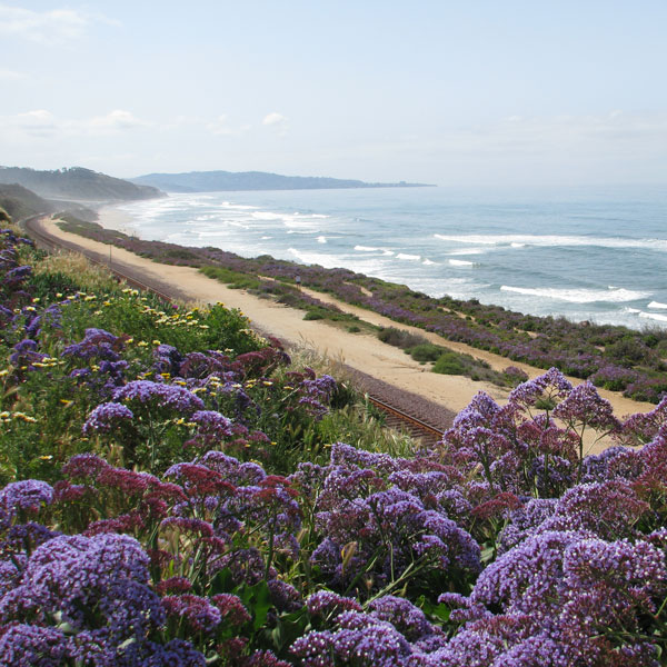 Take a walk along the bluffs overlooking Del Mar