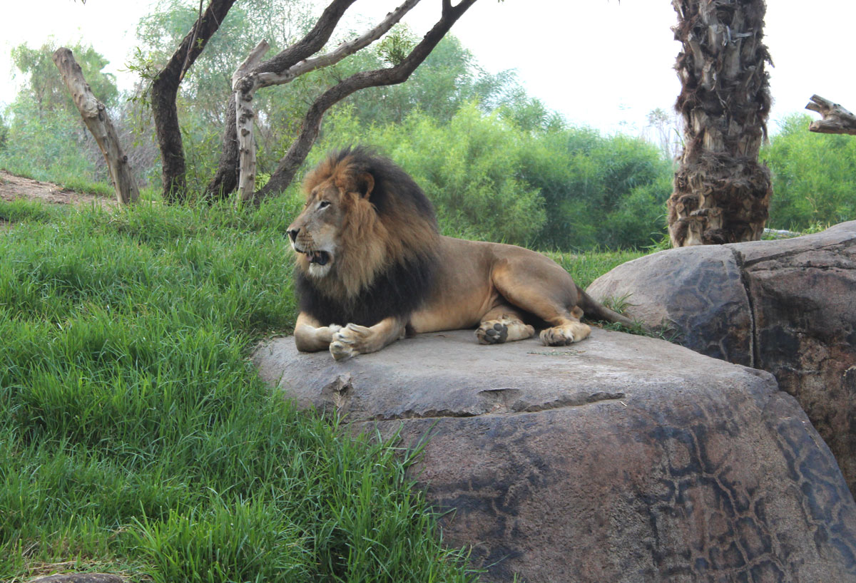 Get close to the animals at San Diego Safari Park