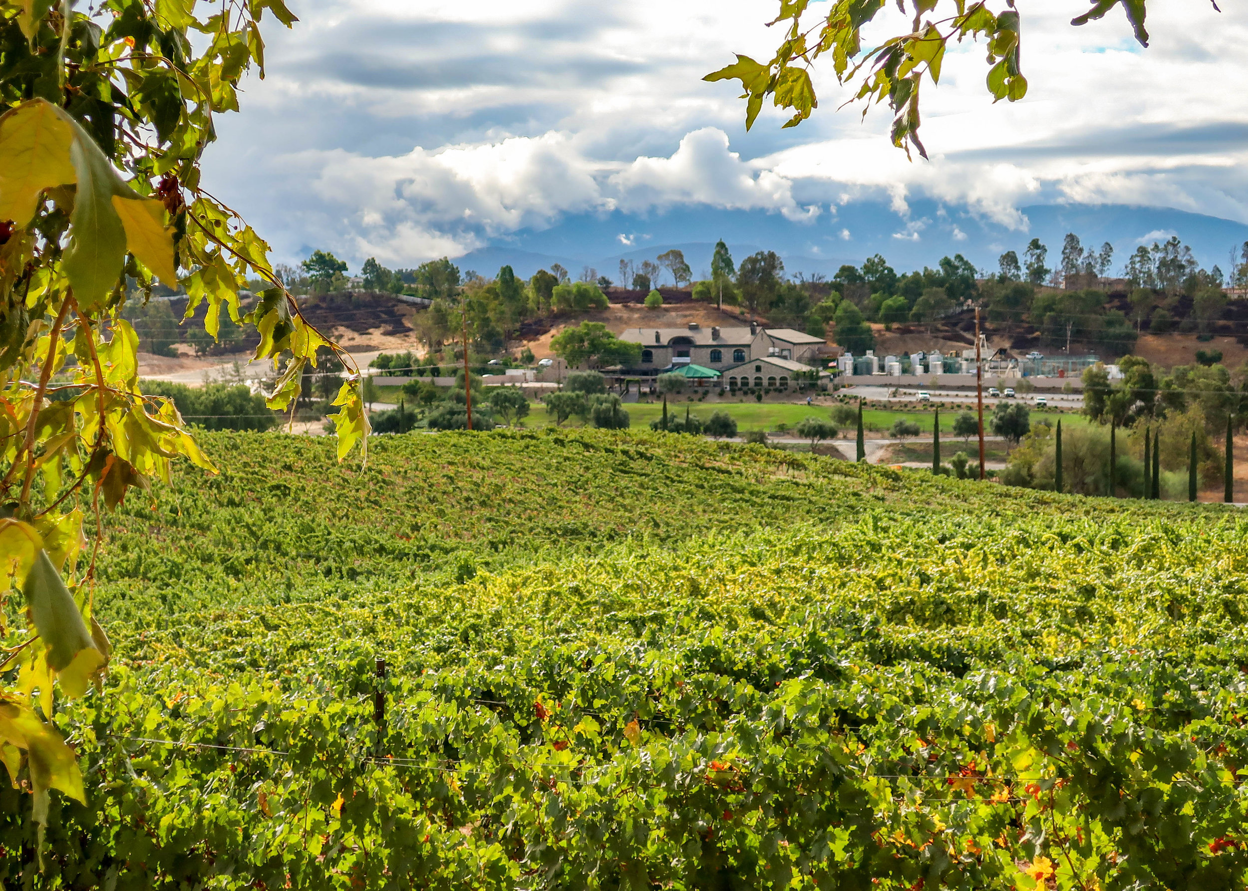 Thornton Winery in Temecula