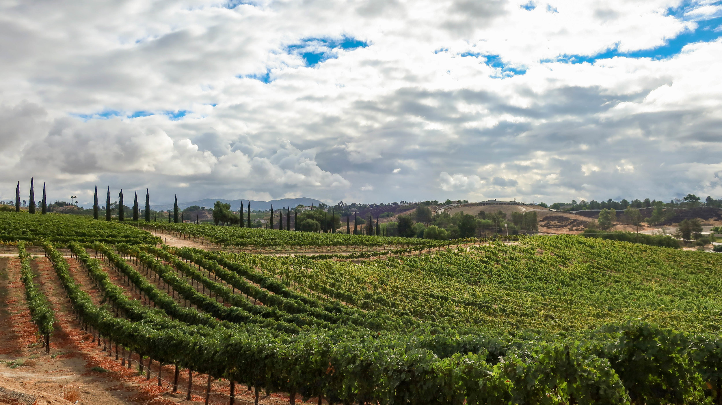 Lovely Temecula Wine Country