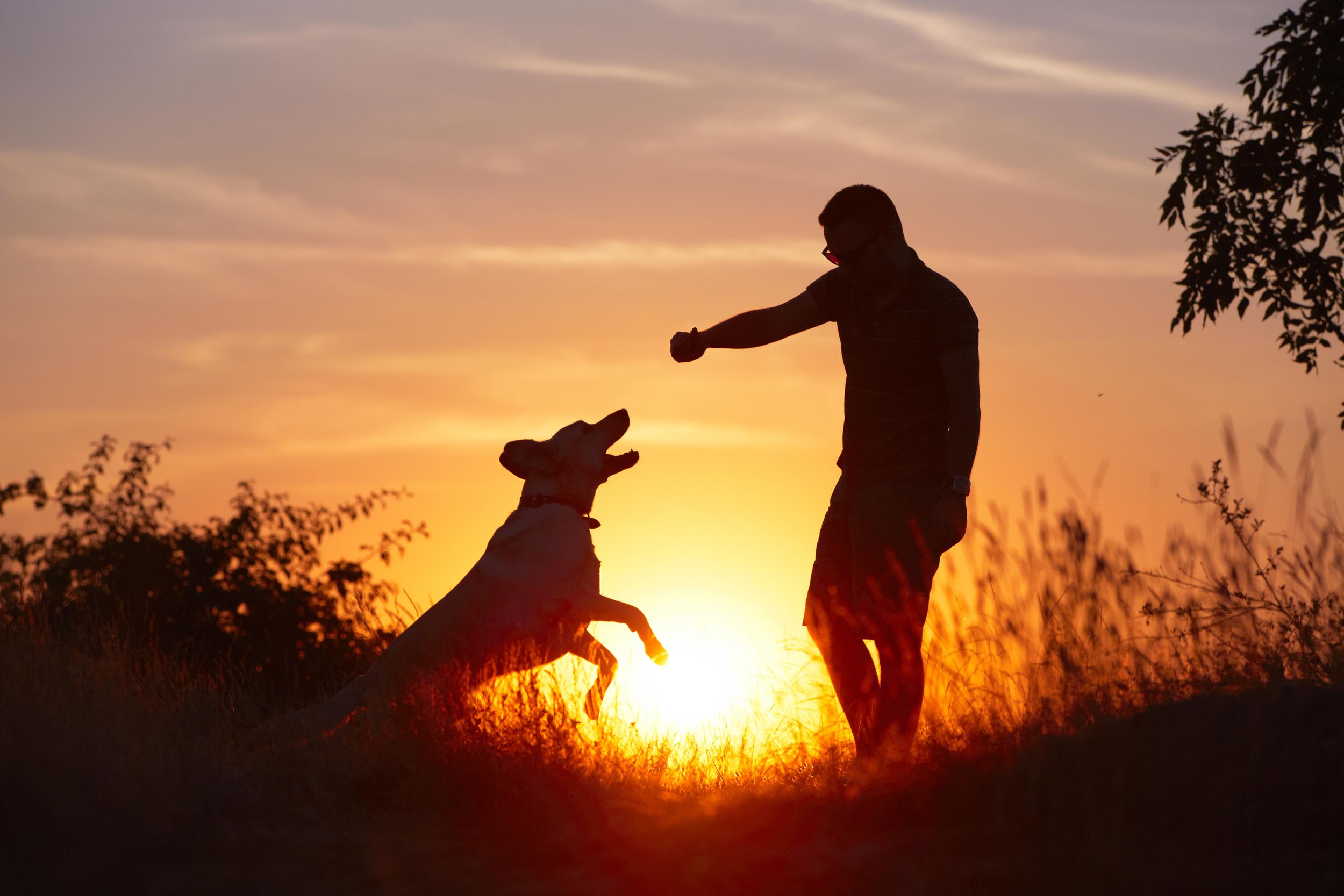 bigstock-Man-With-Dog-48271799.jpg