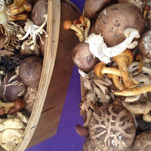 Gorgeous #mushrooms🍄 . Umami-rich adaptogens. Pair these in a soup with #BoneBroth 🍵 and be nourished. 💪 --- I love all of the super food and adaptogen supplements, teas and other health boosting products. I love these for travel. The convenience of these little boosts is such a luxury. --- However, we all evolved to absorb and use nutrients in their whole food form. It's what our bodies have become experts at over thousands of years. Over-concentrated nutritional supplements devoid of their whole food origins are only partially absorbed and the rest excreted. You will be making some gorgeous urine but, what if✨instead we let those nutrients fulfill their purpose which is to make us and our children strong and healthy. Enjoy real whole food and enjoy good health.
