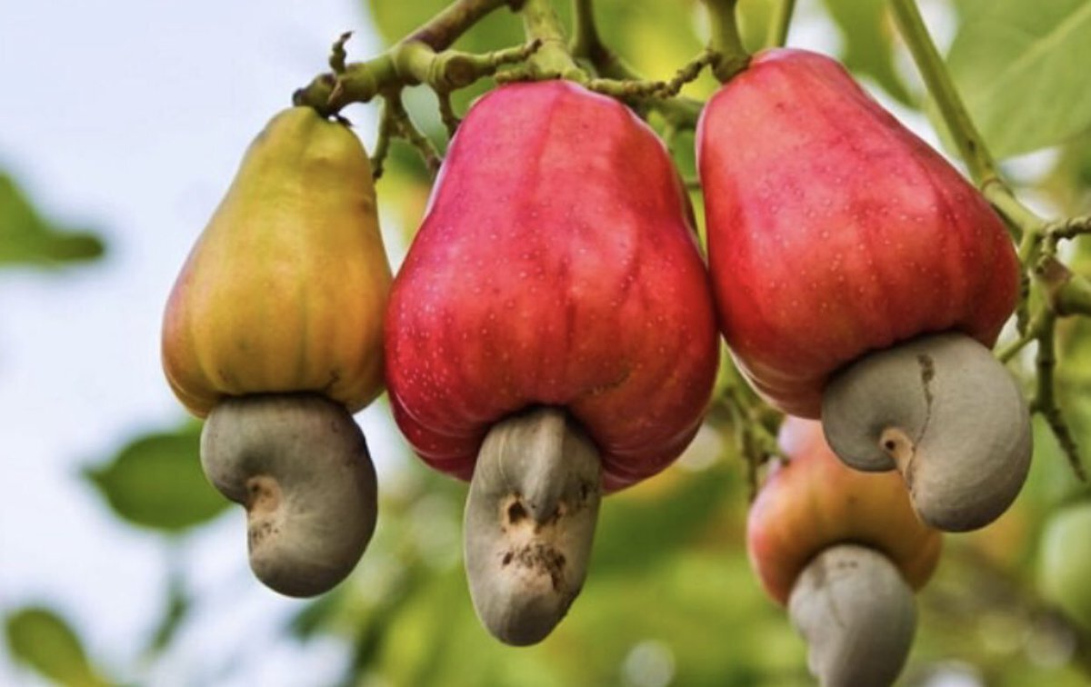 cashews.jpeg