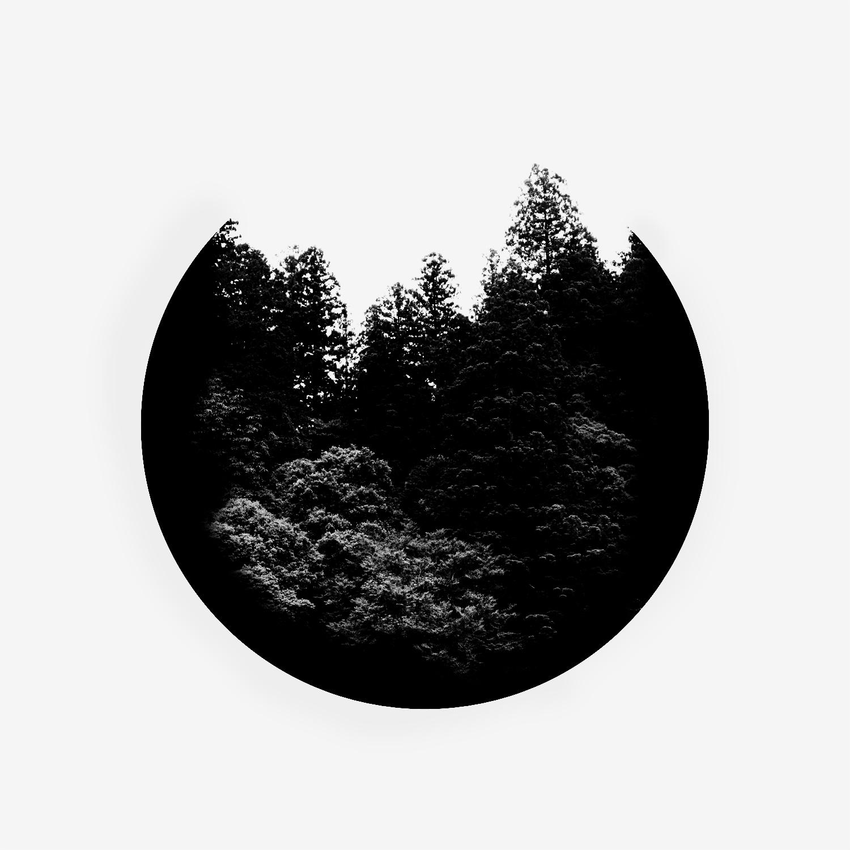 Trees, Black - $200