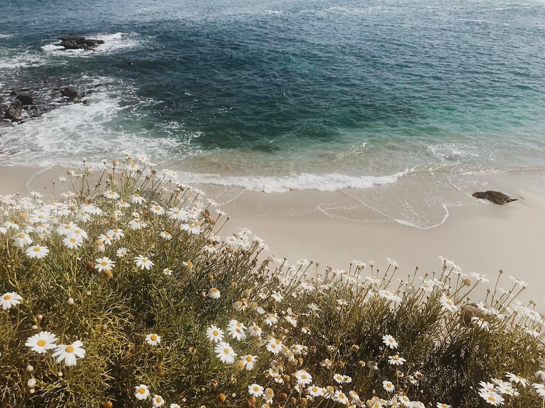 San Diego by Eliza Sloane.jpg