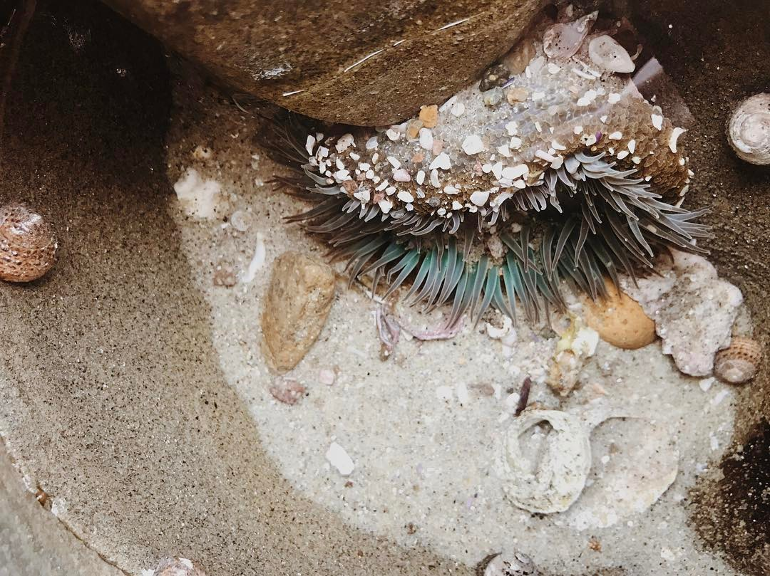 eliza sloane sea life.jpg