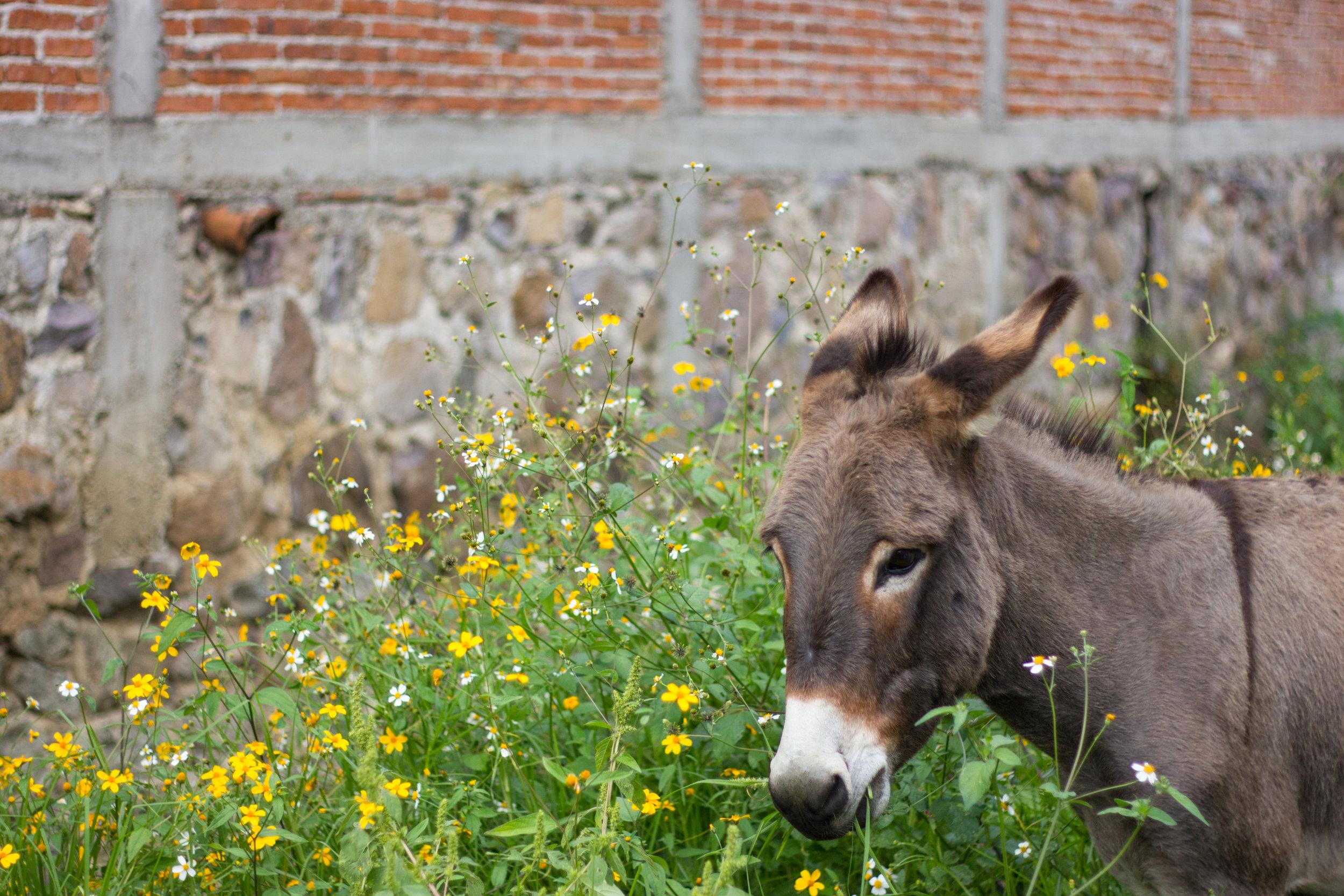 oaxaca burro by leah pellegrini for thread caravan.jpg