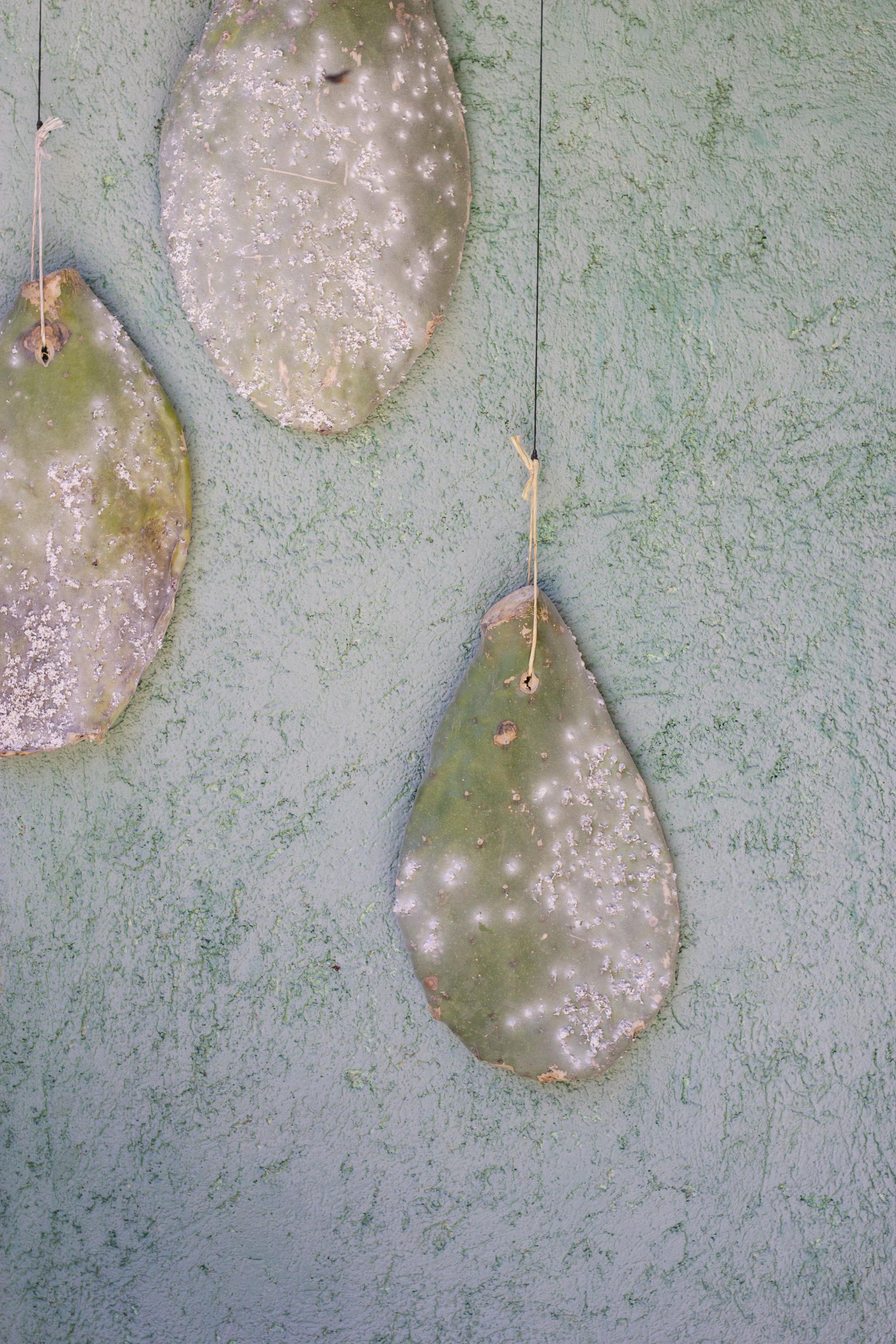 cochineal in oaxaca by thread caravan leah pellegrini.jpg