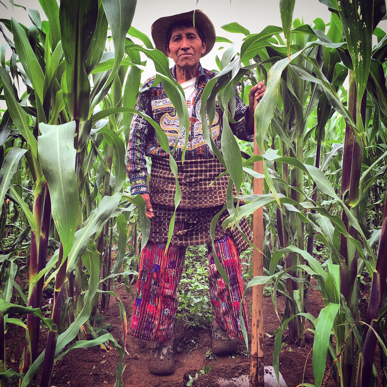 solola corn farmer in traje by luna zorro thread caravan.jpg