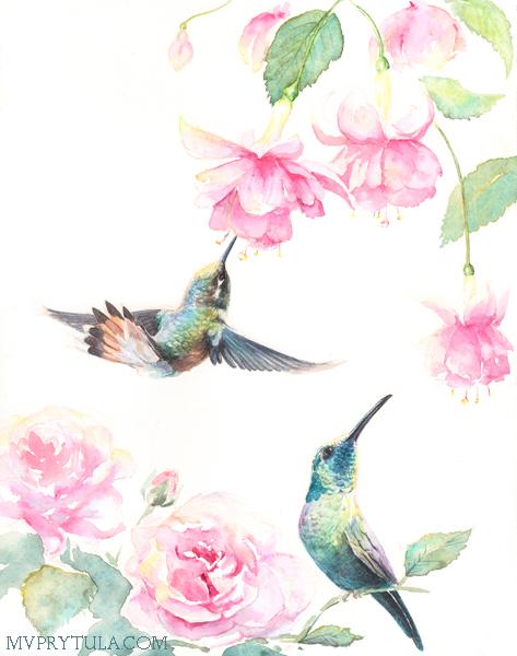 hummingbirds_300_web.jpg