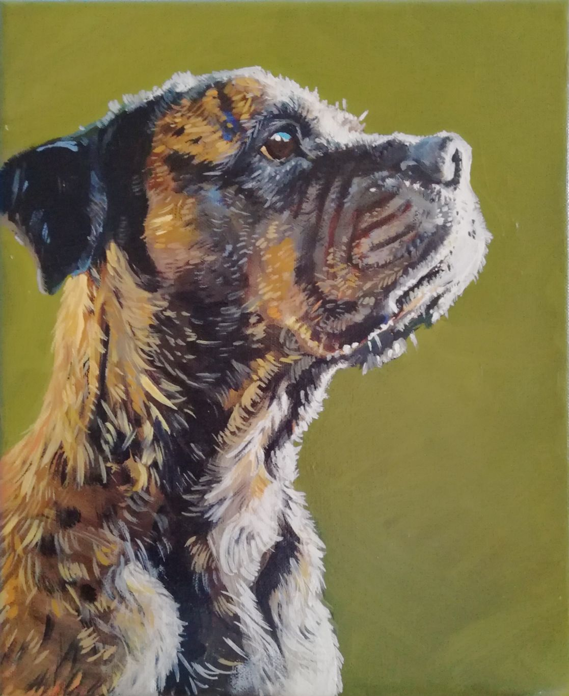 """From Jon - """"So special! You have captured Tiger so well, so real with all the character too, absolutely brilliant painting, and in oils too, the texture adds substance and life. Its outstanding, I love it. Thank you so much"""""""