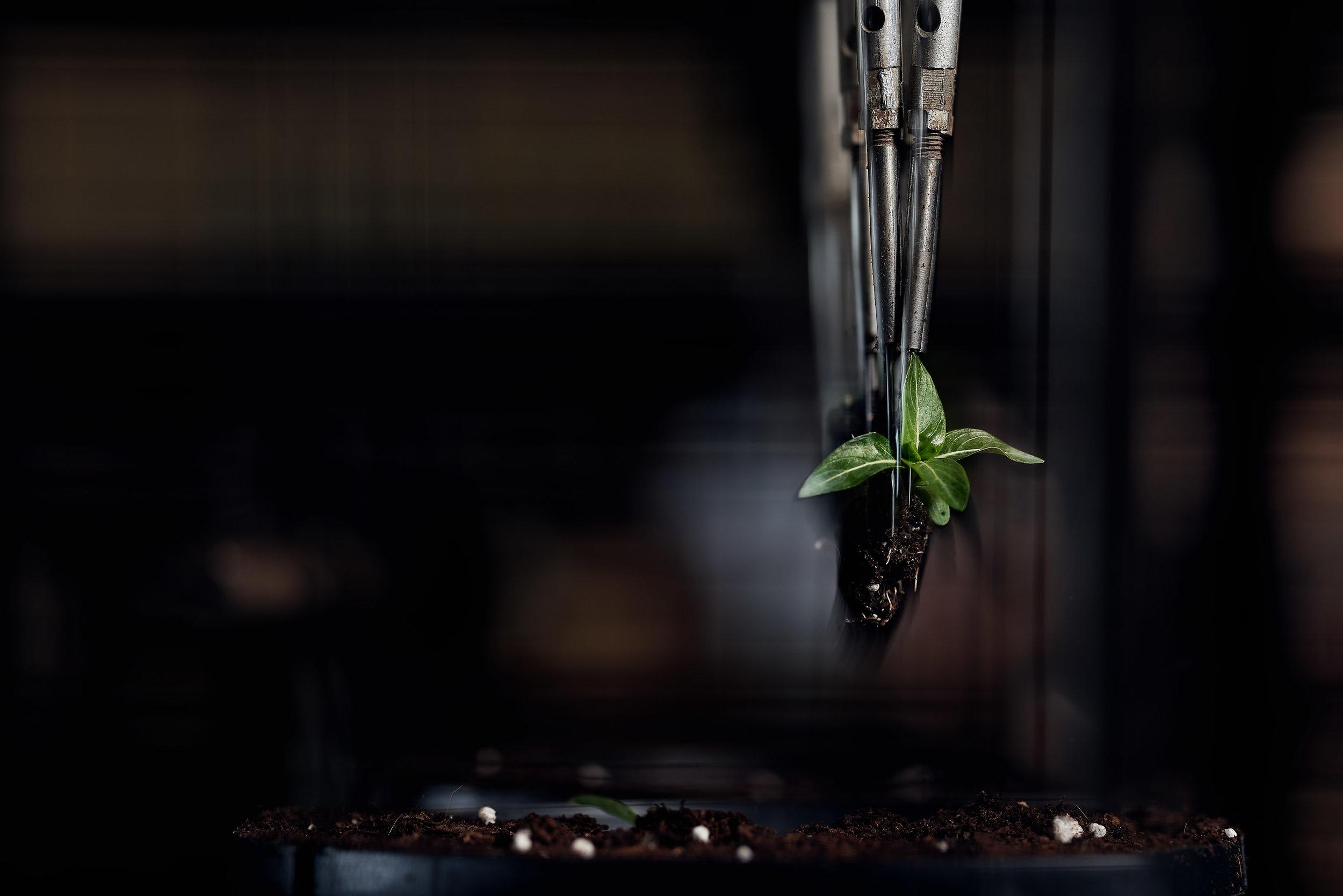 My Second Favorite Shot: Sony A7riii + Sigma Art 135mm