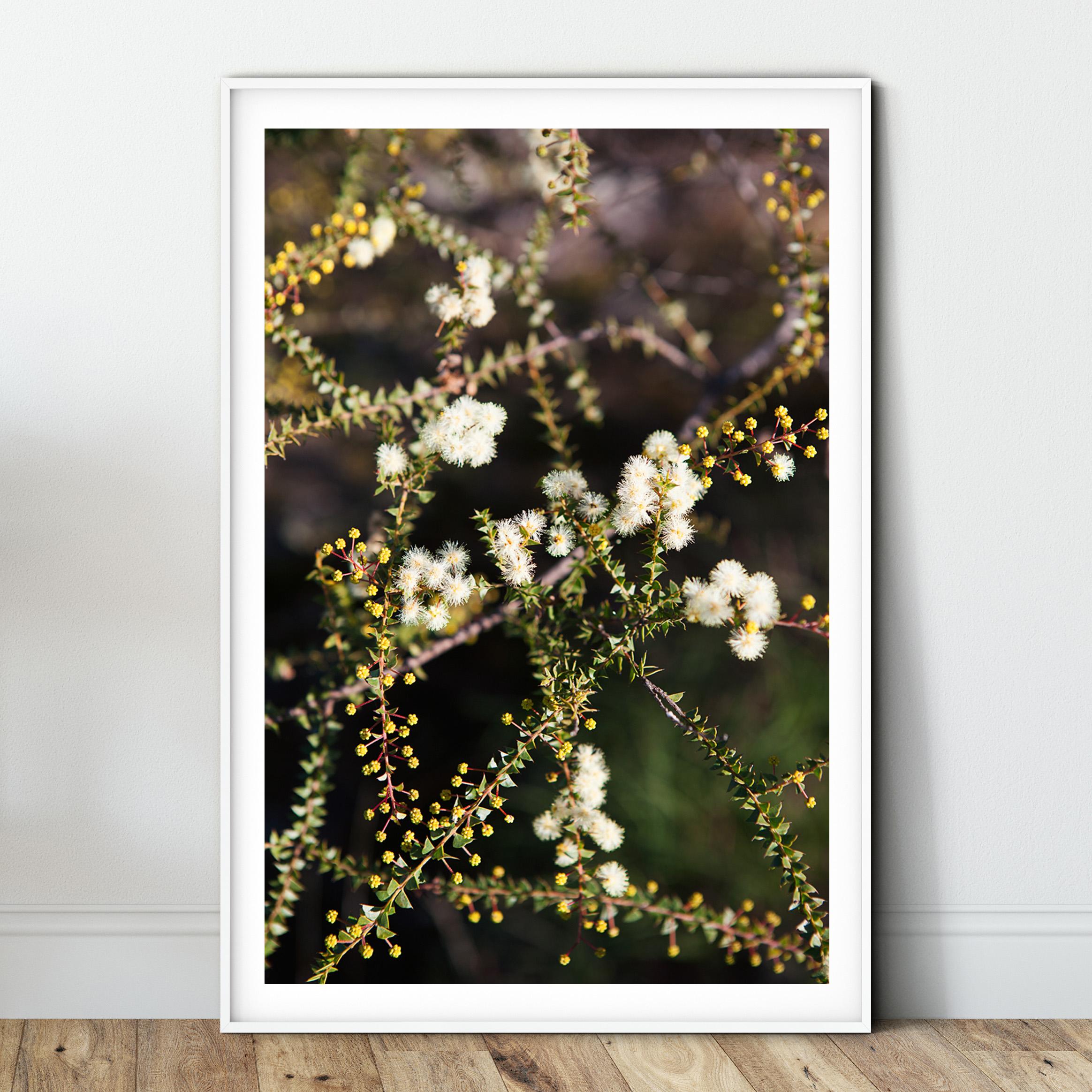 bush blossom - white.jpg
