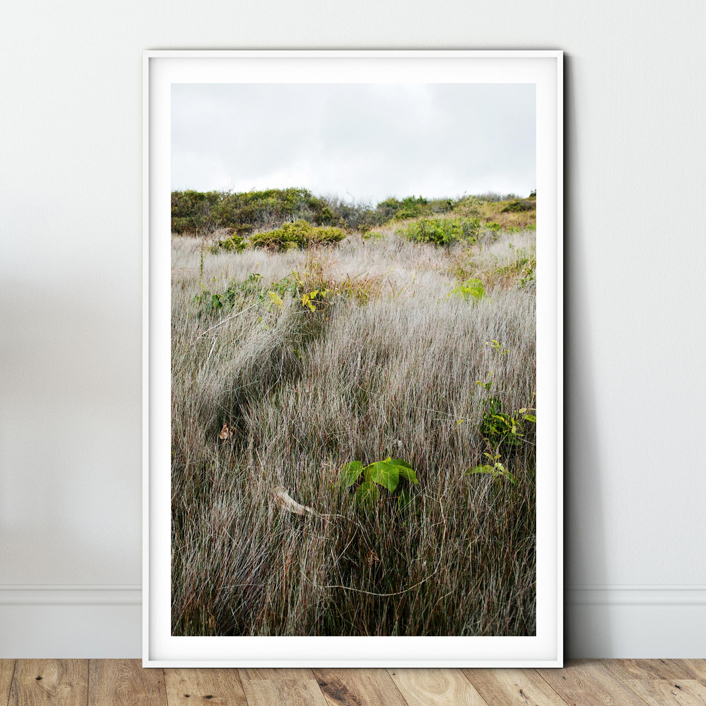 coastal track hillside - white.jpg