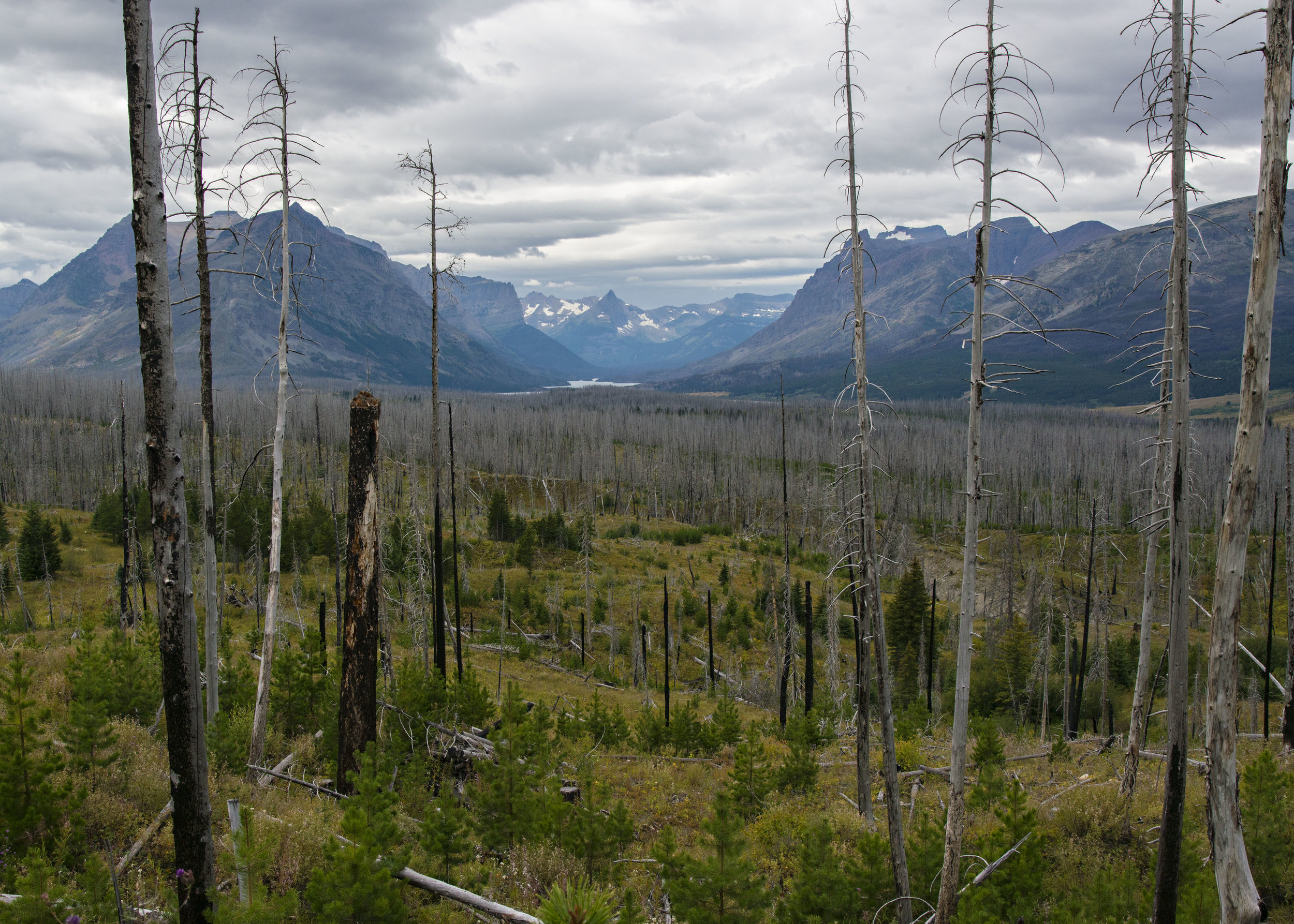 View to the west from just outside Lake Mary entrance to Glacier National Park through fire-scarred forest. Much of Glacier is a forbidding place. You wouldn't want to be here in the winter. Nikon D800, Nikkor 24-120mm lens @ 38mm, ISO 500, f13, 1/640 sec, -2/3 stop exposure adjustment.