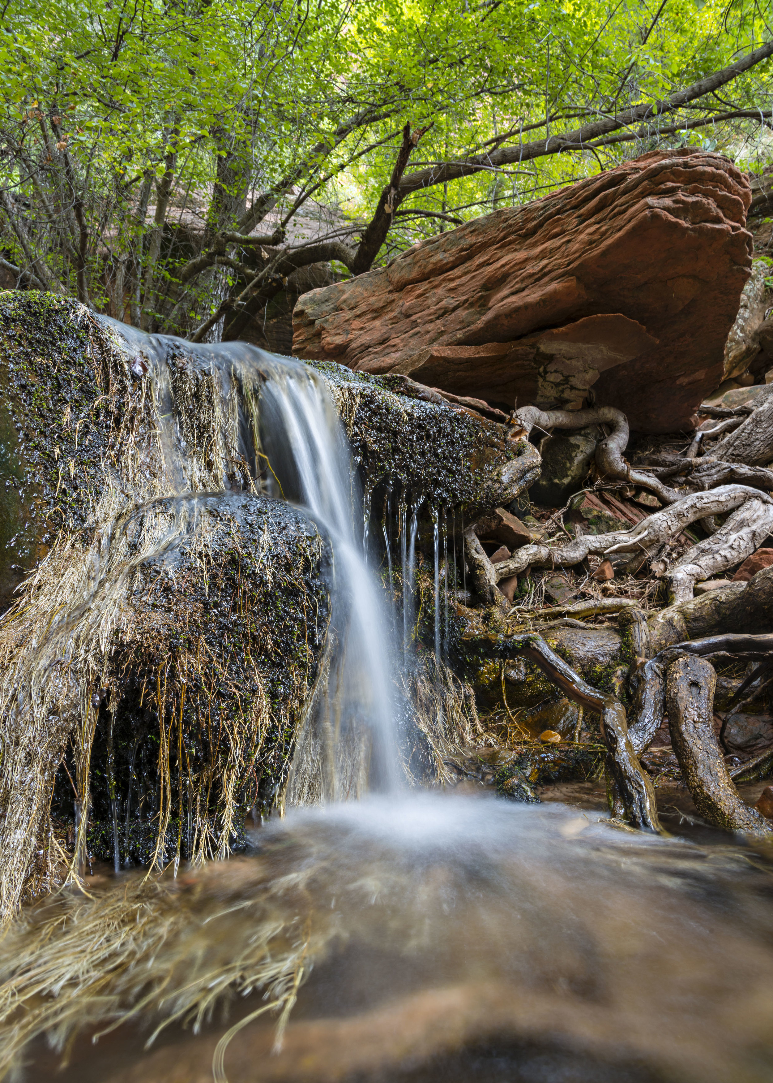 Tree roots reach for nourishment around waterfall above Middle Emerald Pool in Zion National Park.  Nikon D800, Nikkor 24-120mm lens @ 24mm, ISO 100, f13, 1.3 seconds.