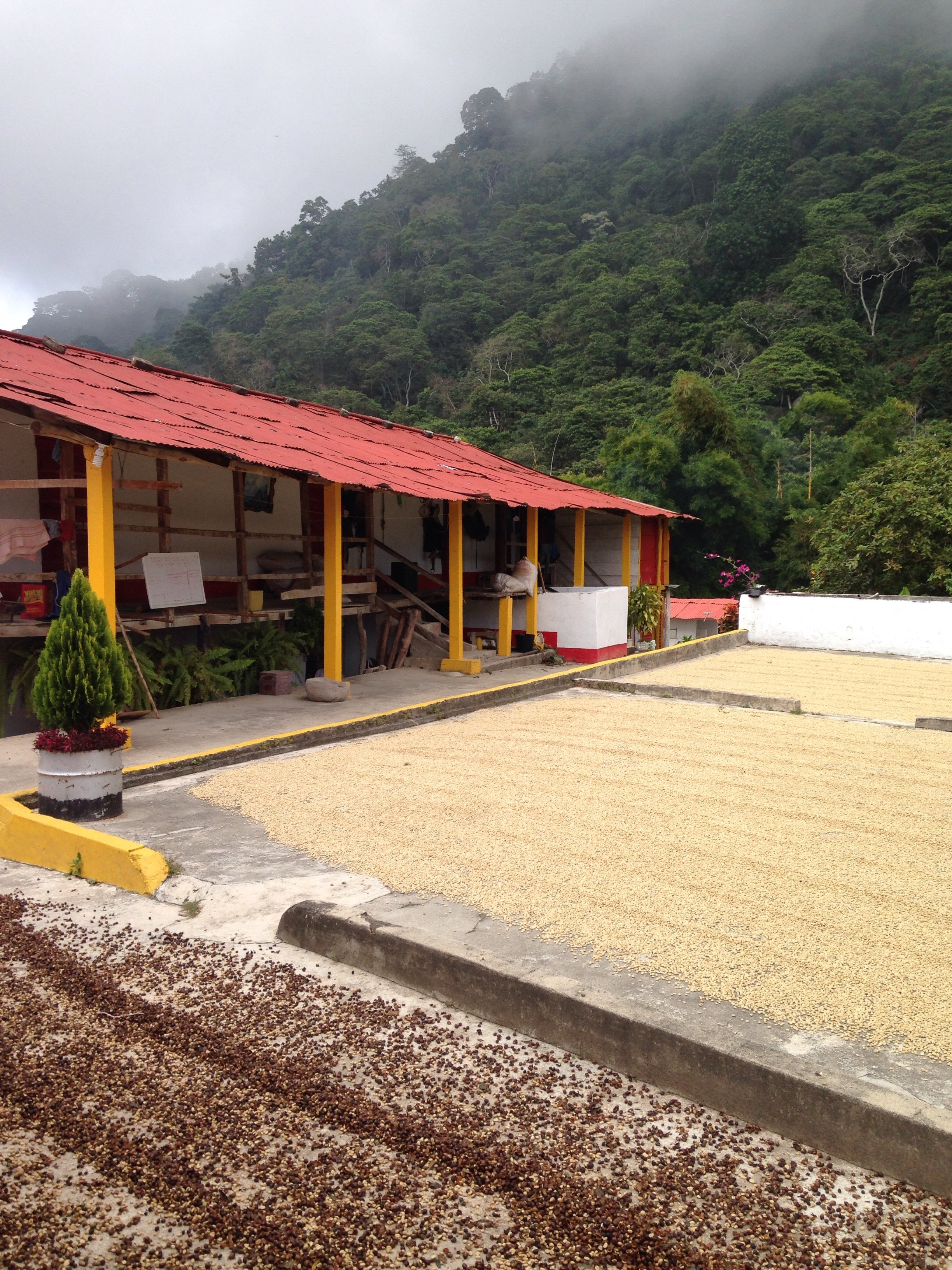 Coffee Beans at La Candelaria