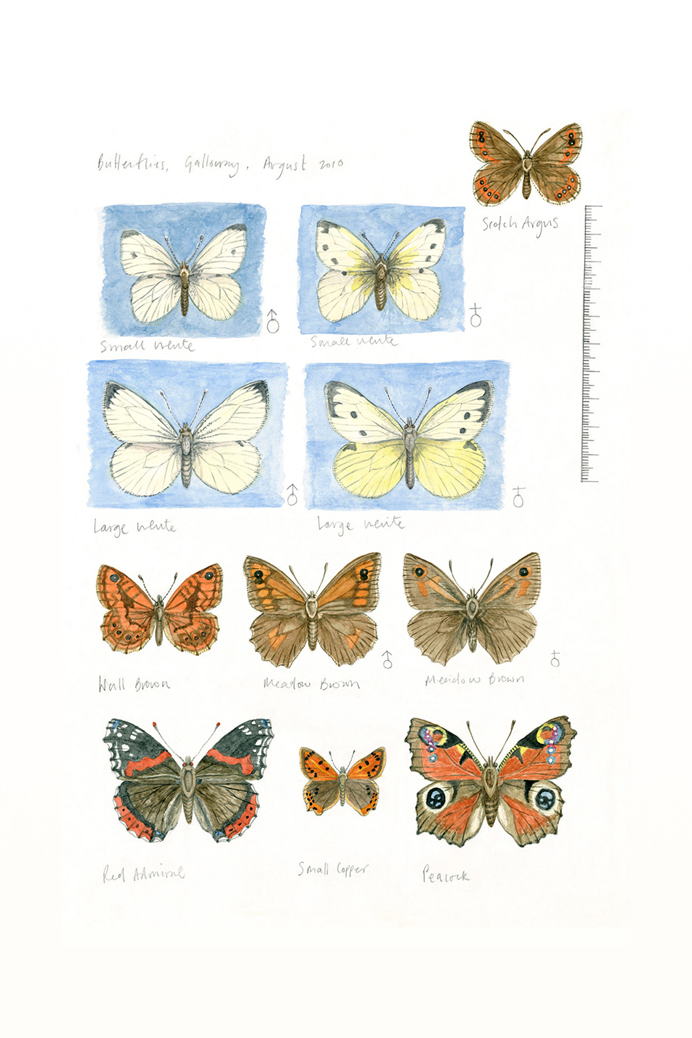 Butterflies, Galloway Estate (sketchbook page), 2010, watercolour and pencil on paper