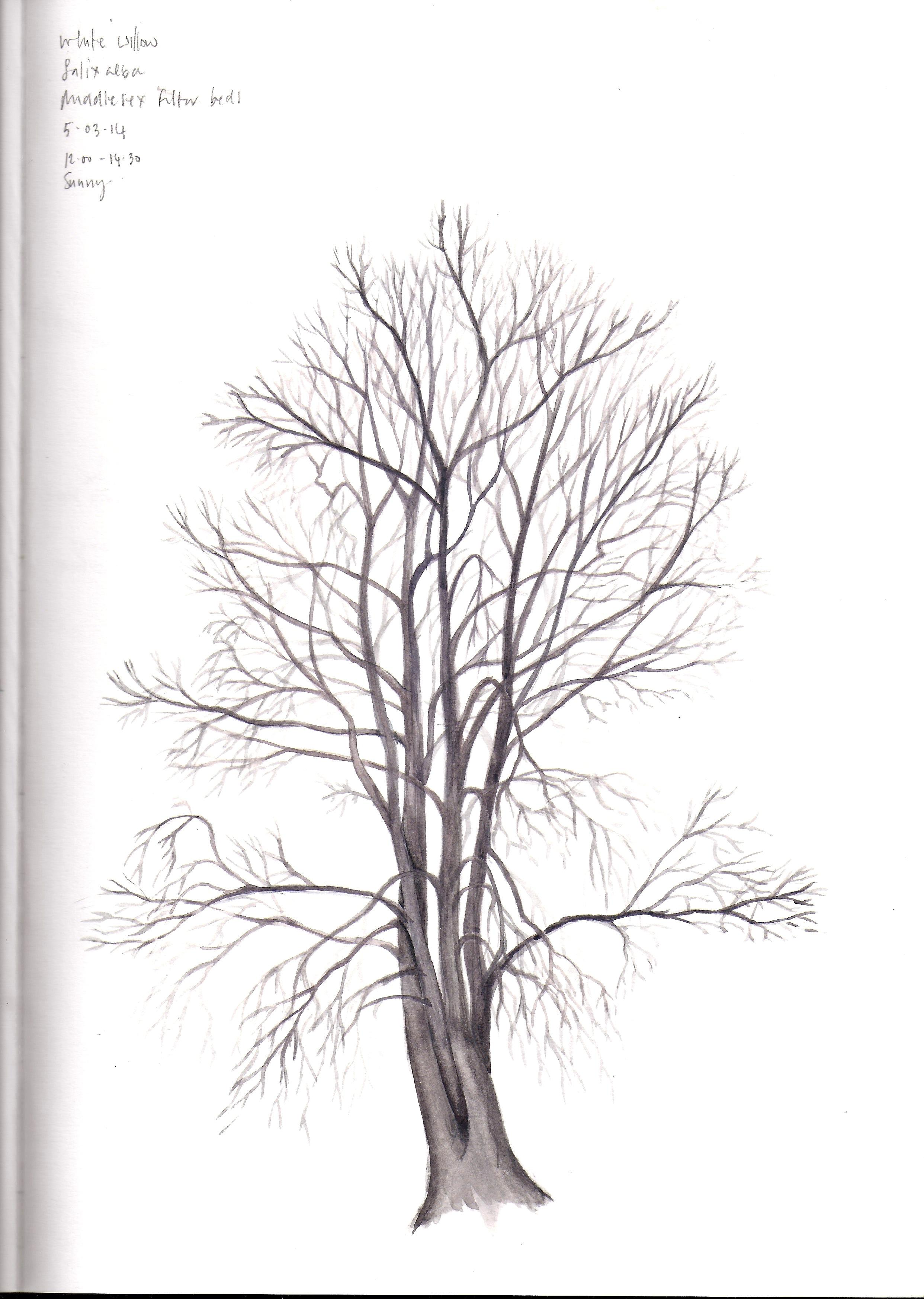 white willow-1.jpeg
