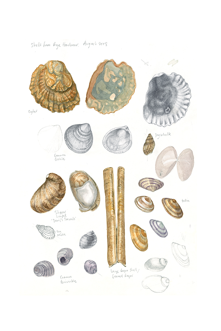Shells, Rye Harbour (sketchbook page), 2008, watercolour and pencil on paper