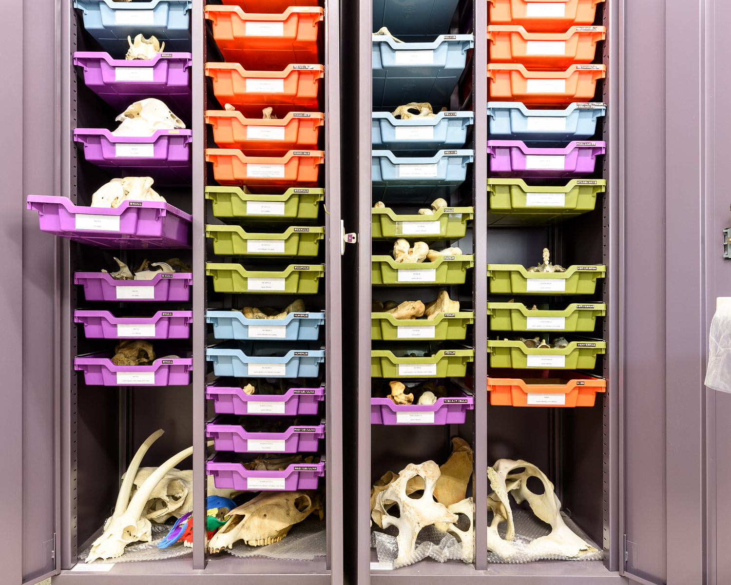 The Fitch Laboratory reference collection of animal bones, hosting modern skeletons of a large number of species, facilitates the visual characterization of the often fragmented bones recovered from excavations