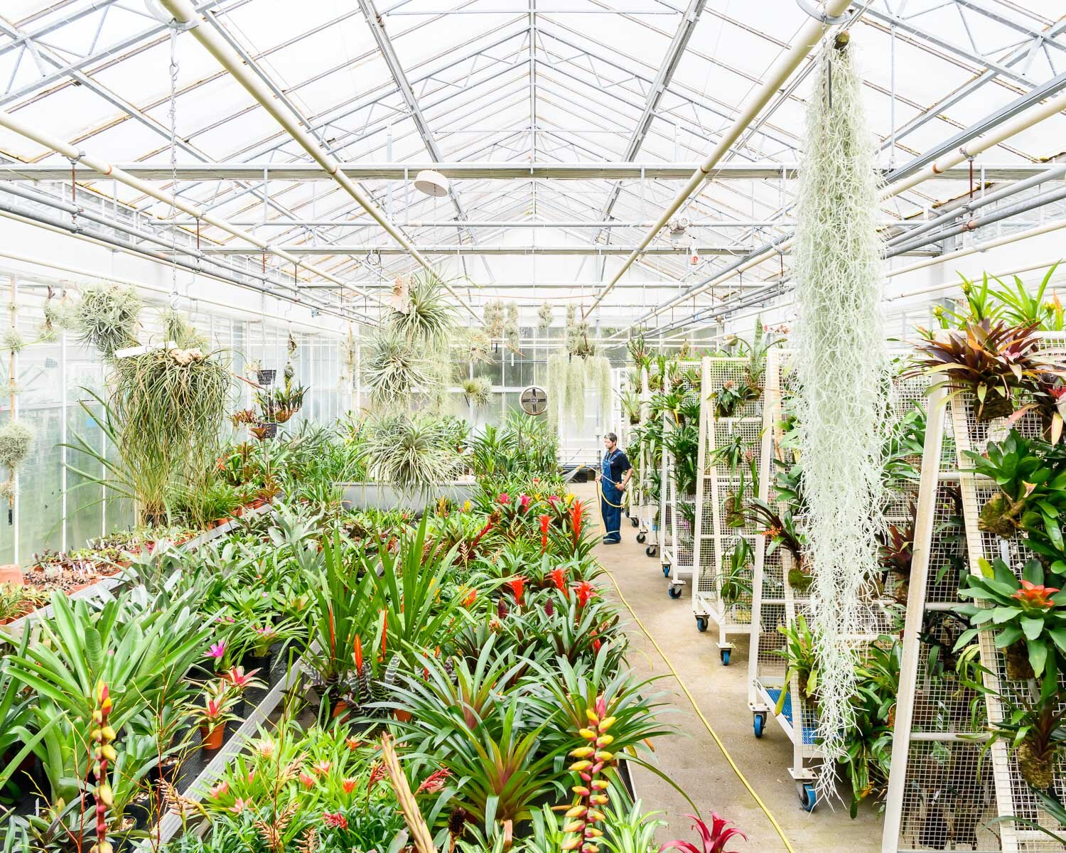 Plants, such as bromeliads and epiphytes, are cultivated in computer-controlled climate zones at Kew