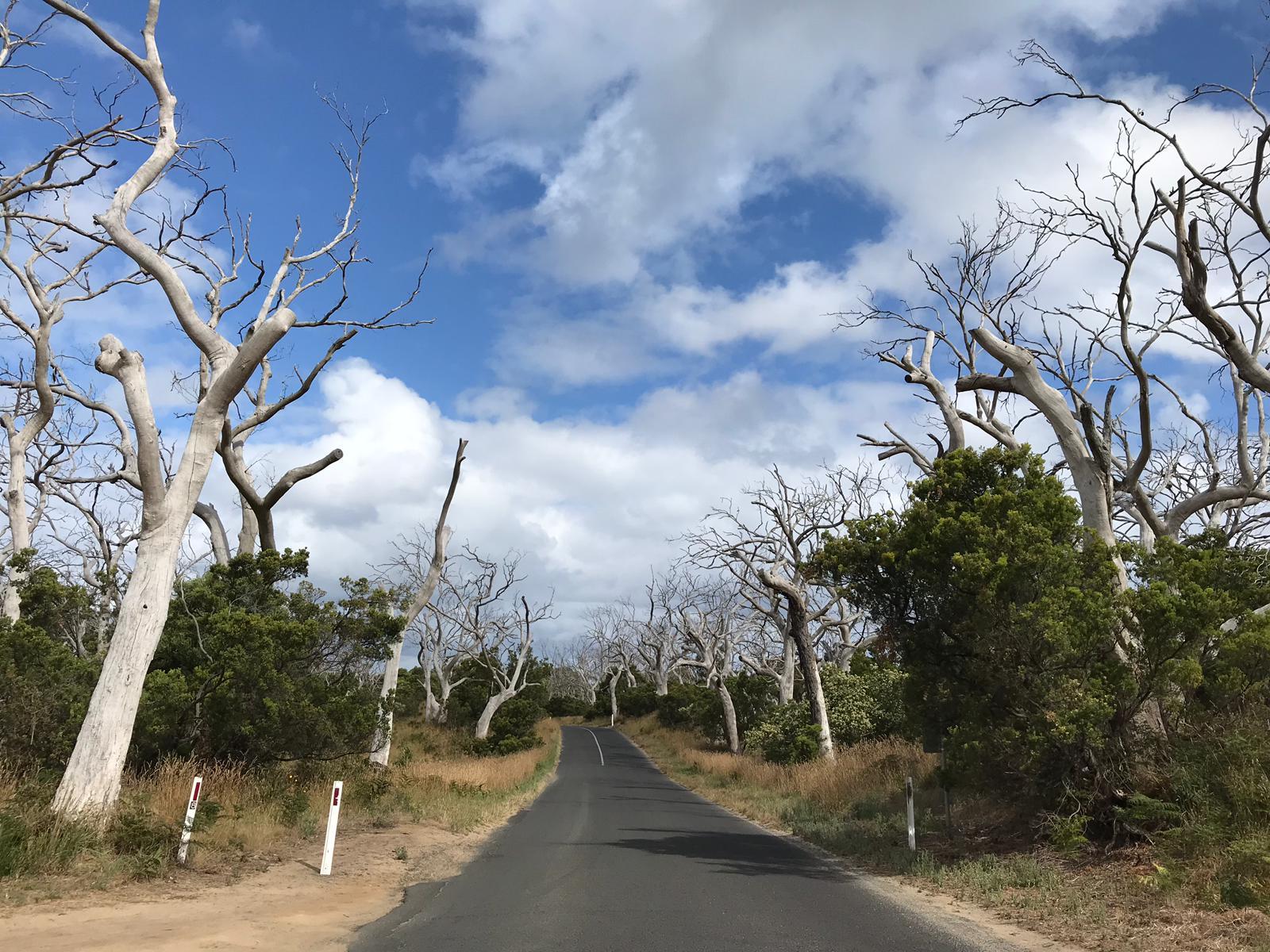 Cape Otway
