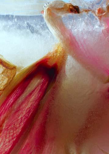 lilja | lily | lirio