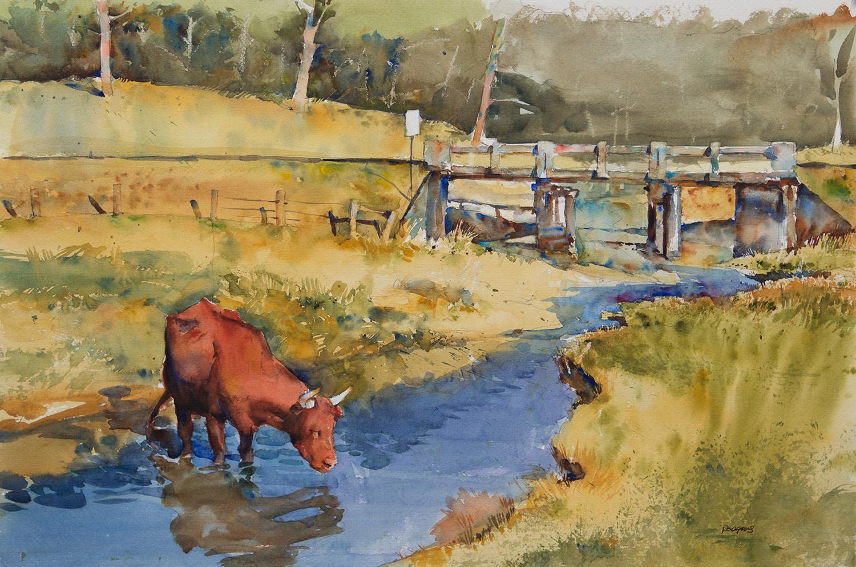 Pleasant Cow