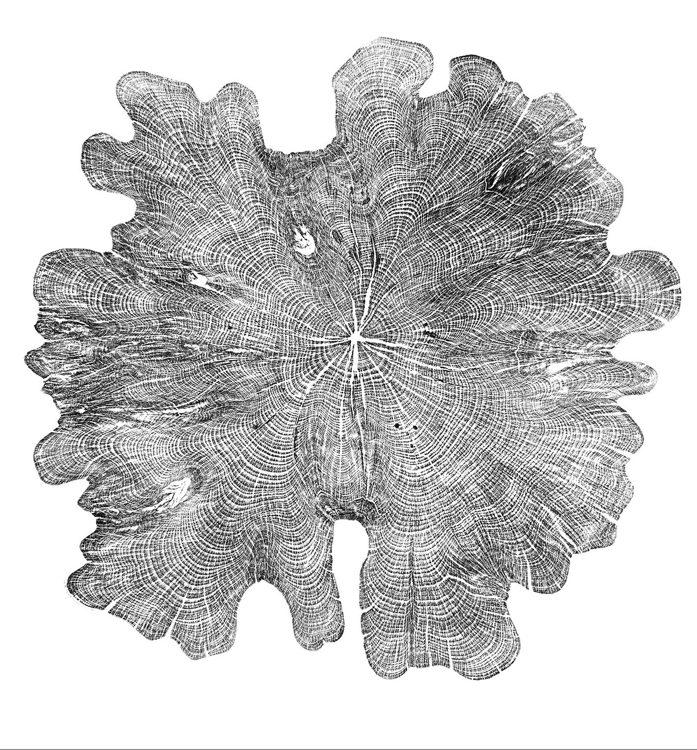 Yew round aged 1913-2018 © Shona Branigan