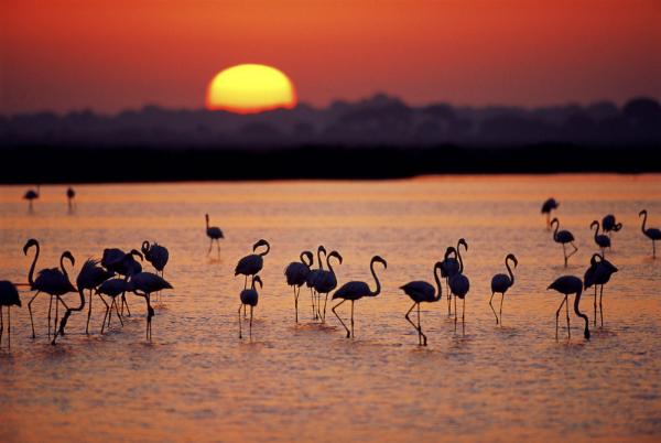 Doñana. © WWF/ Jorge Sierra