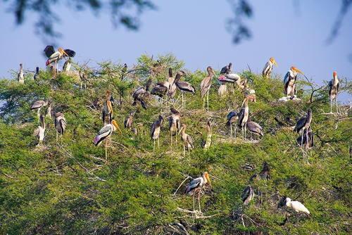 Keoladeo National Park (India) © Vincent Ko Hon Chiu