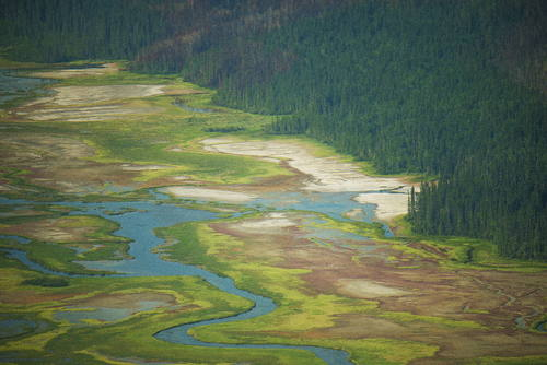 Wood Buffalo National Park (Canadá) © Vincent Ko Hon Chiu