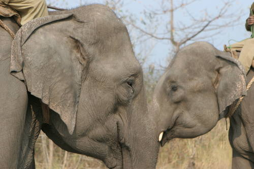 Manas Wildlife Sanctuary (India) © Hervé Lethier