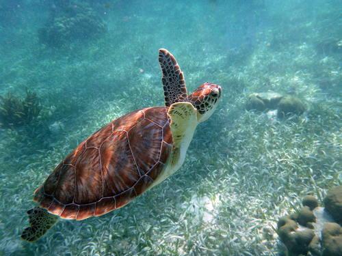 Belize Barrier Reef Reserve System (Belize) © Brandon Rosenblum