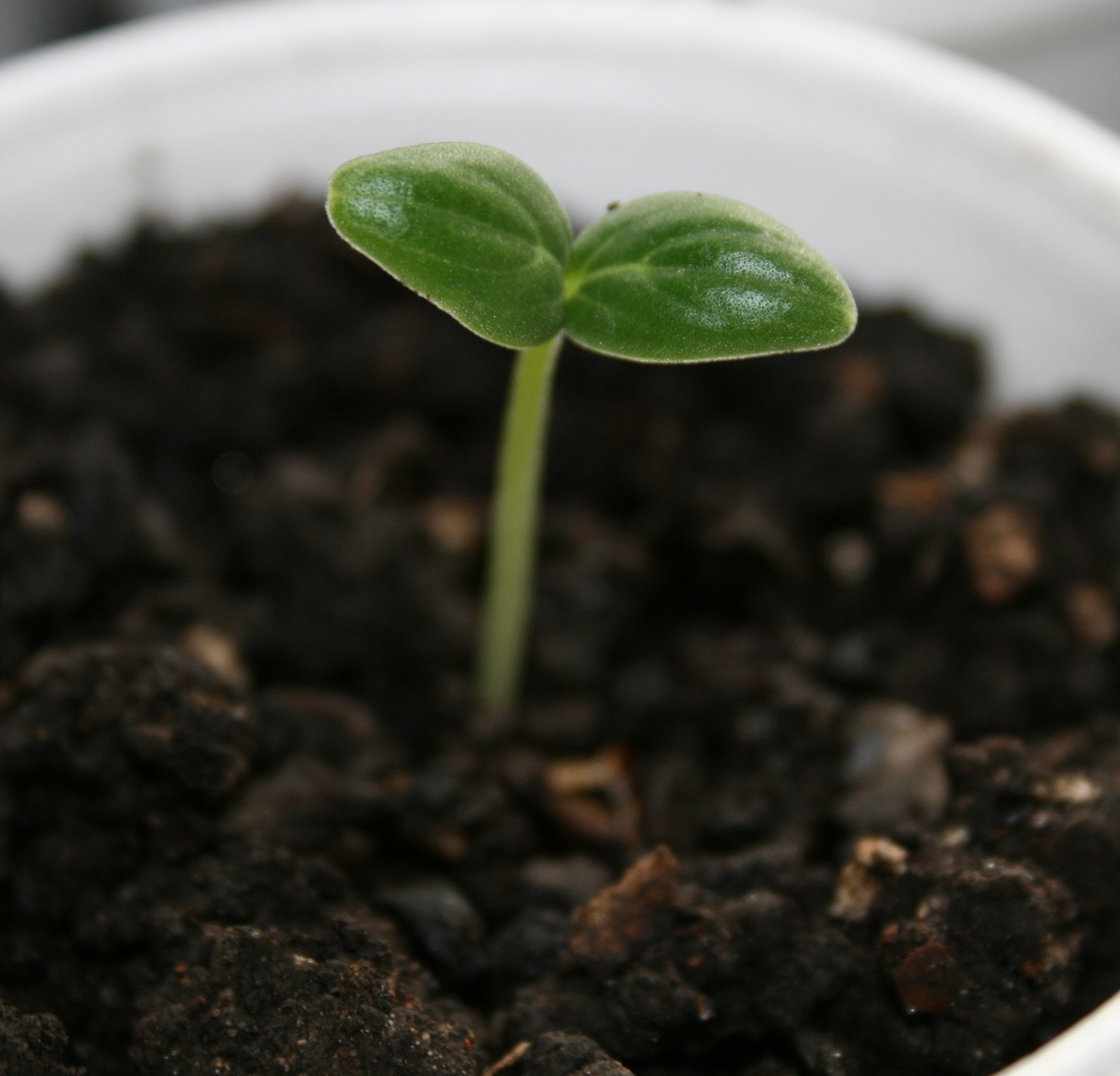 one seedling