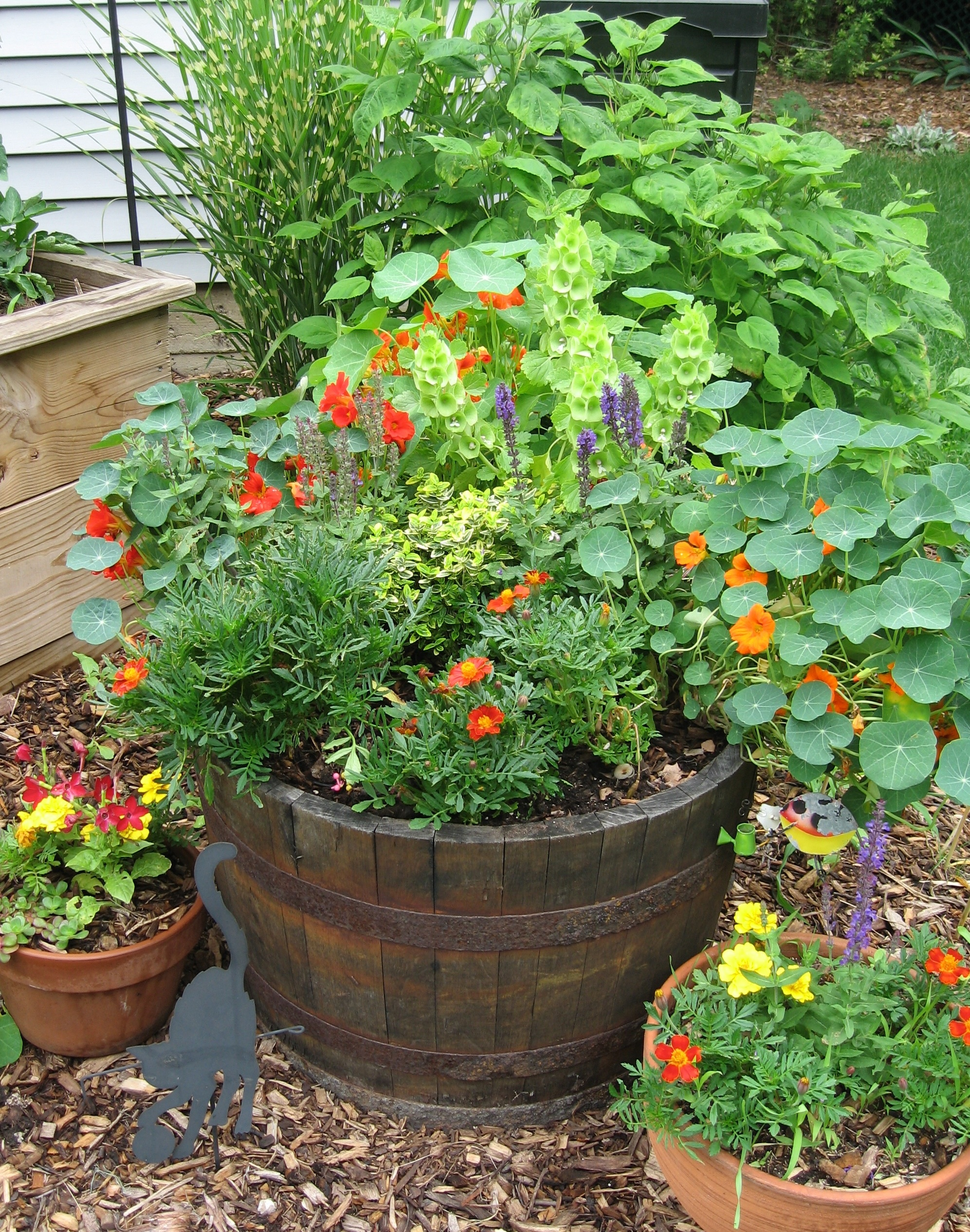 Put some nasturtiums and marigolds in your vegetable garden for a natural way to deter damaging insects.