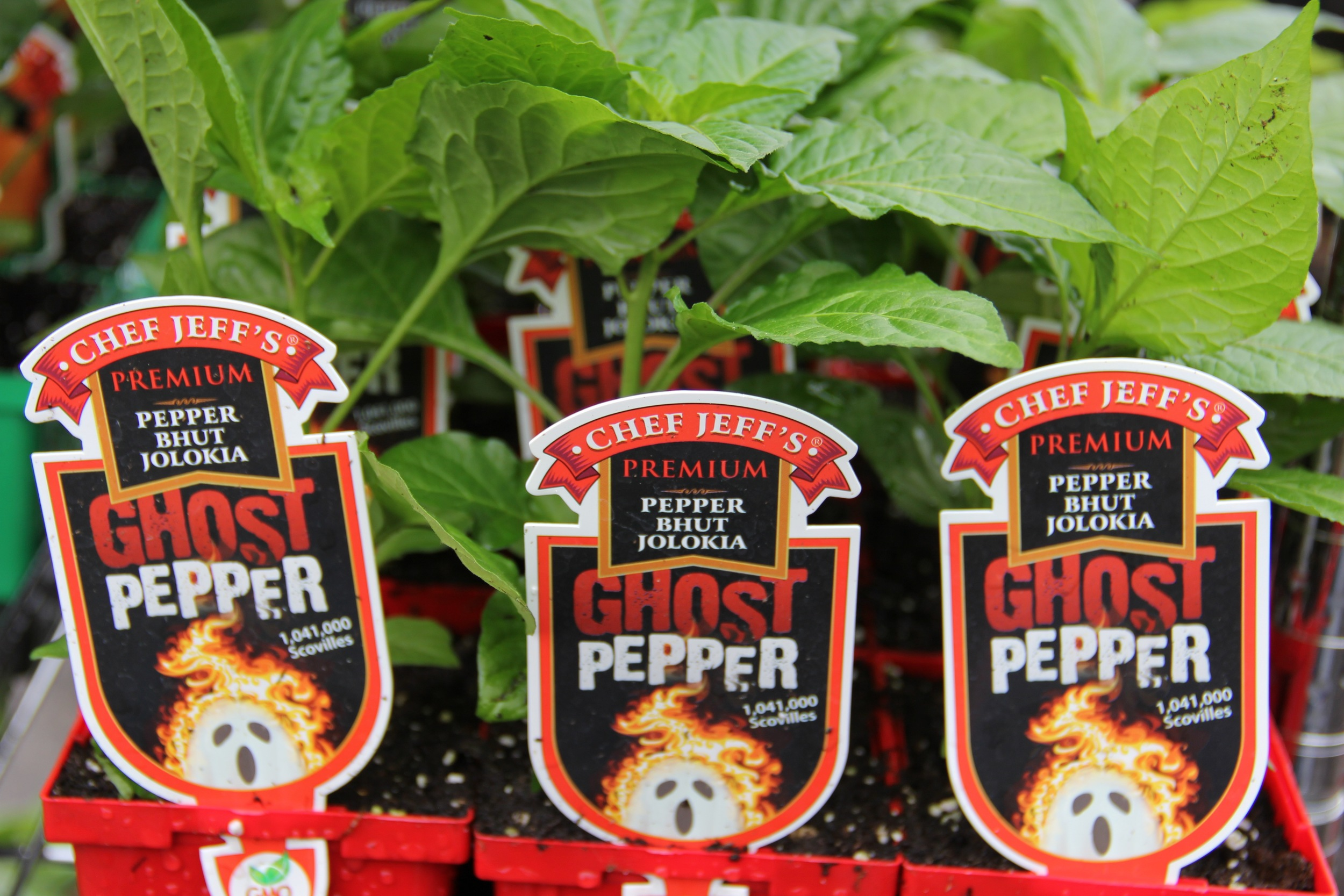 One of the hottest peppers on earth--grow some for yourself!