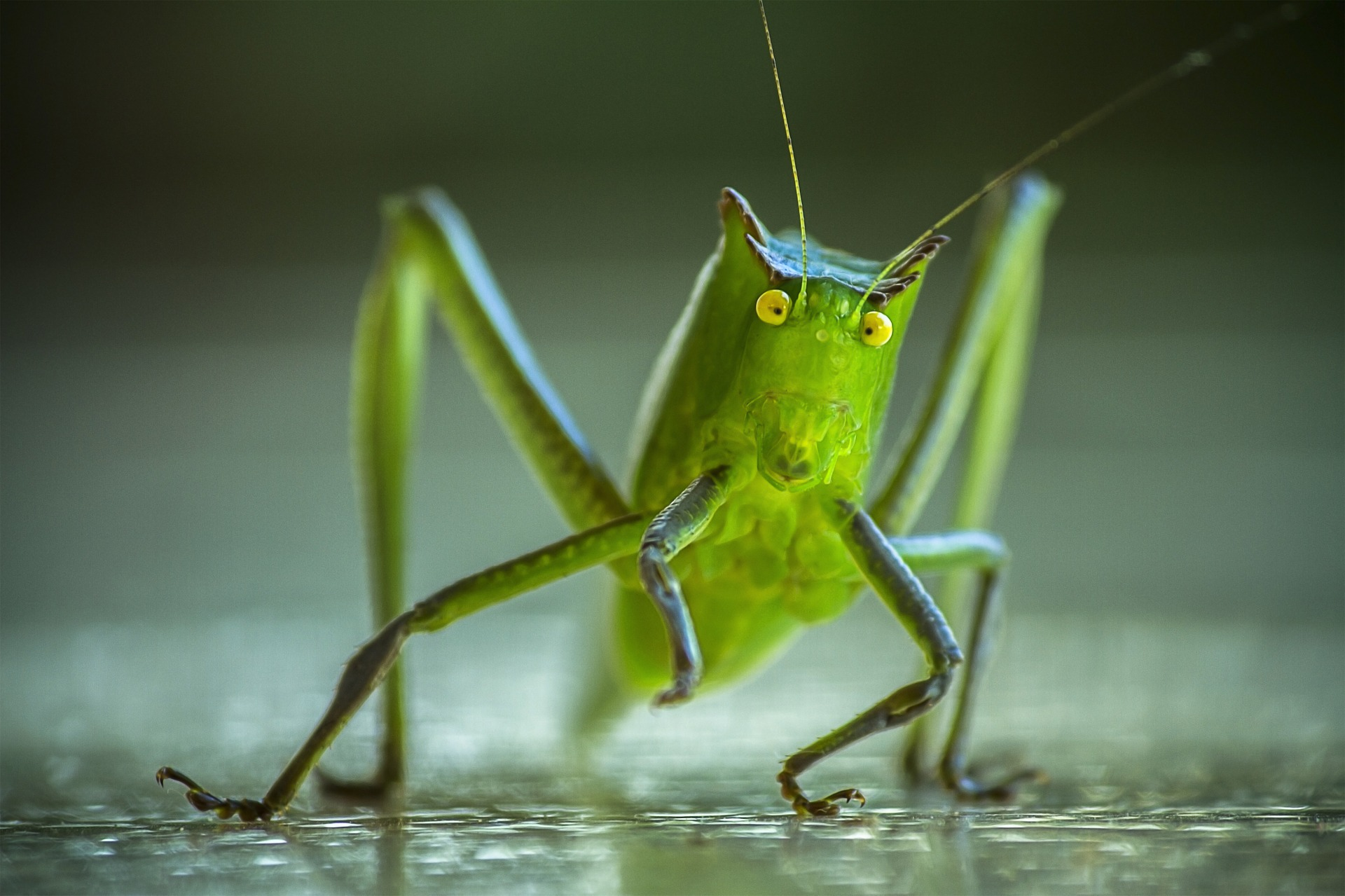 cricket-picture.jpg