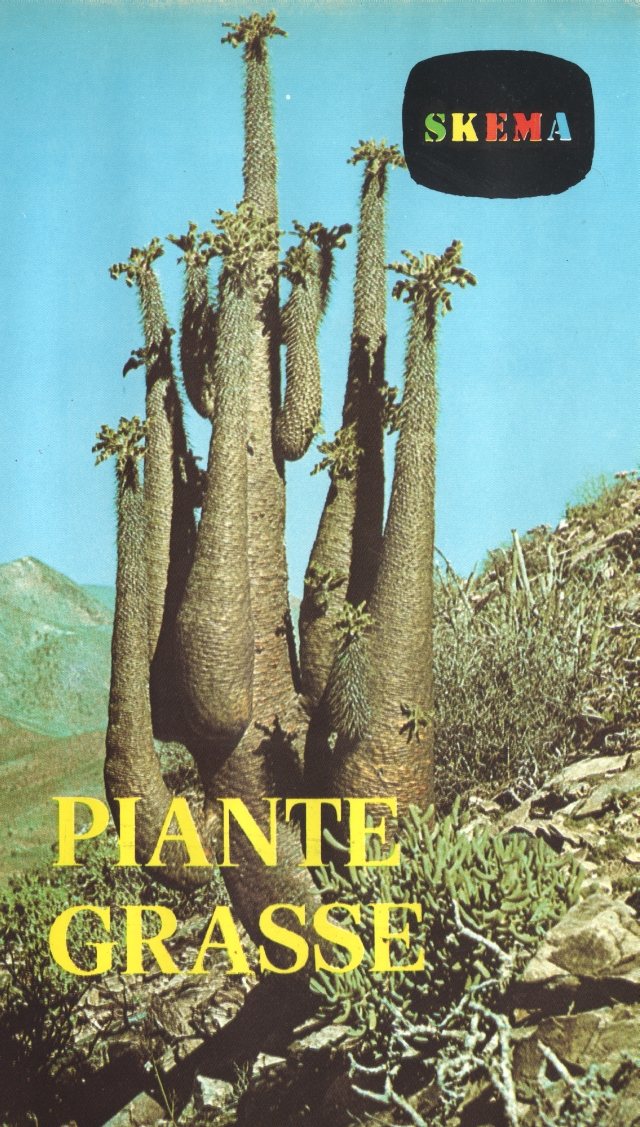 piante grasse 600.jpg