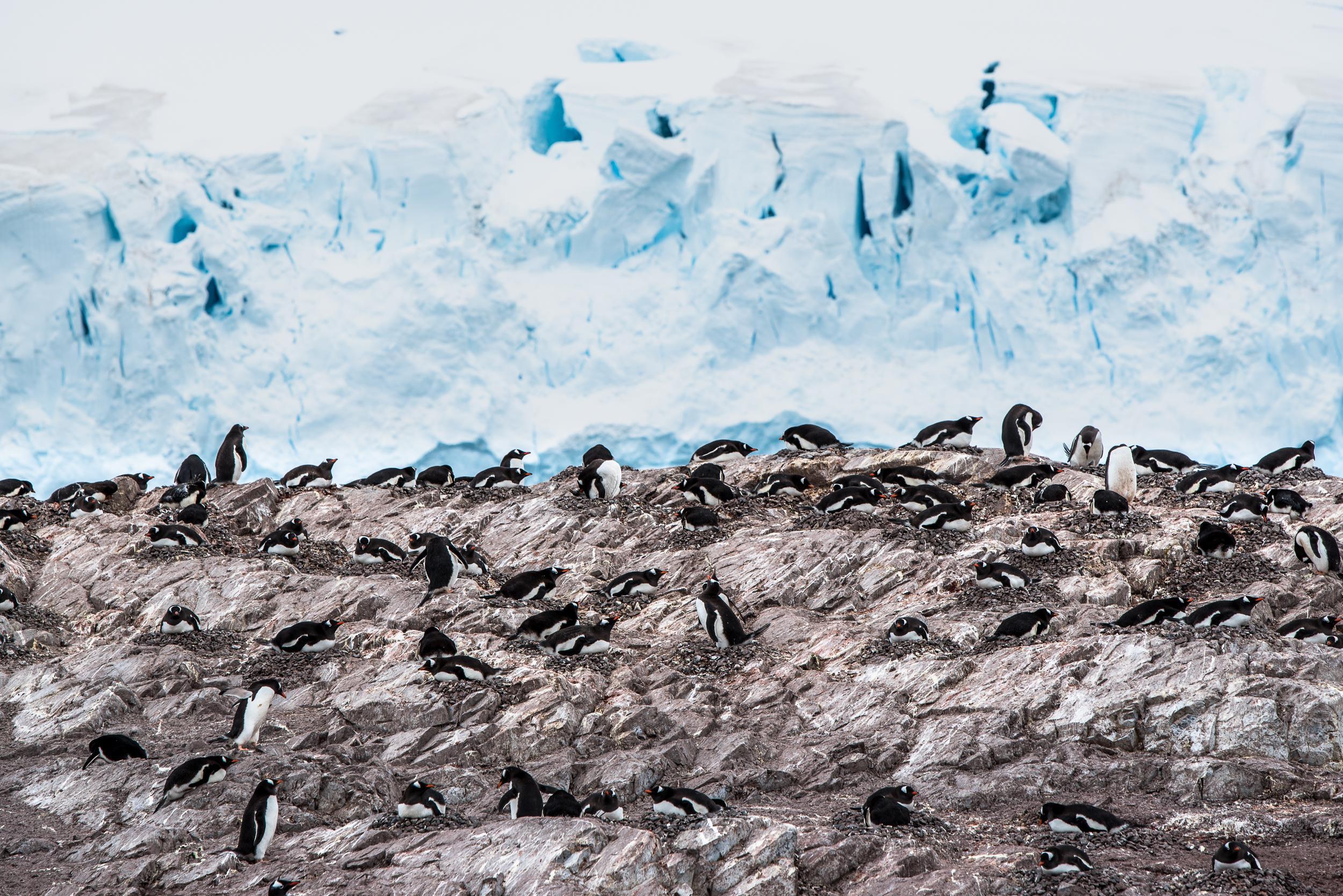 joe-thomas-photo-antarctica-travel-new-york-photographer-13.jpg