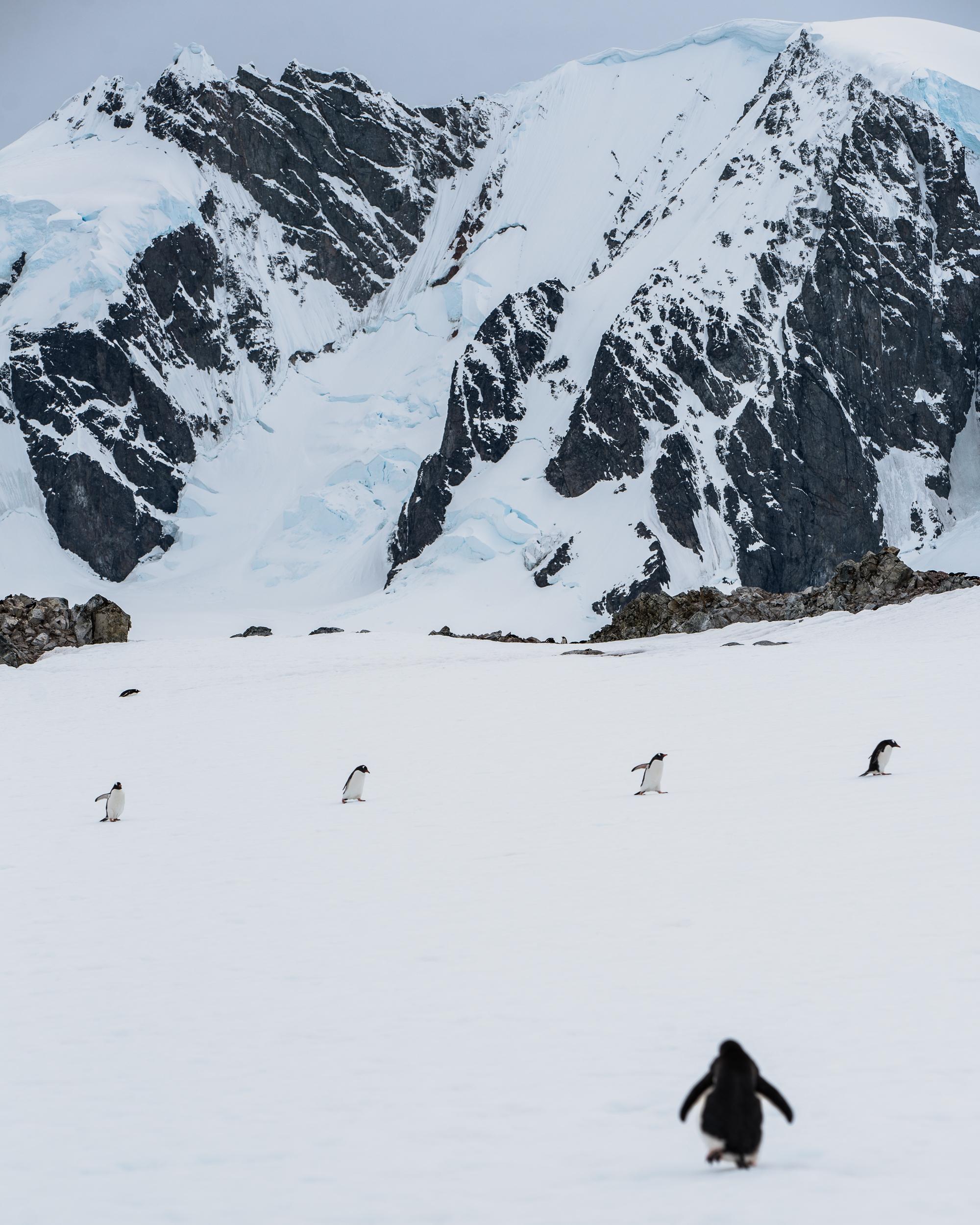 joe-thomas-photo-antarctica-travel-new-york-photographer-15.jpg
