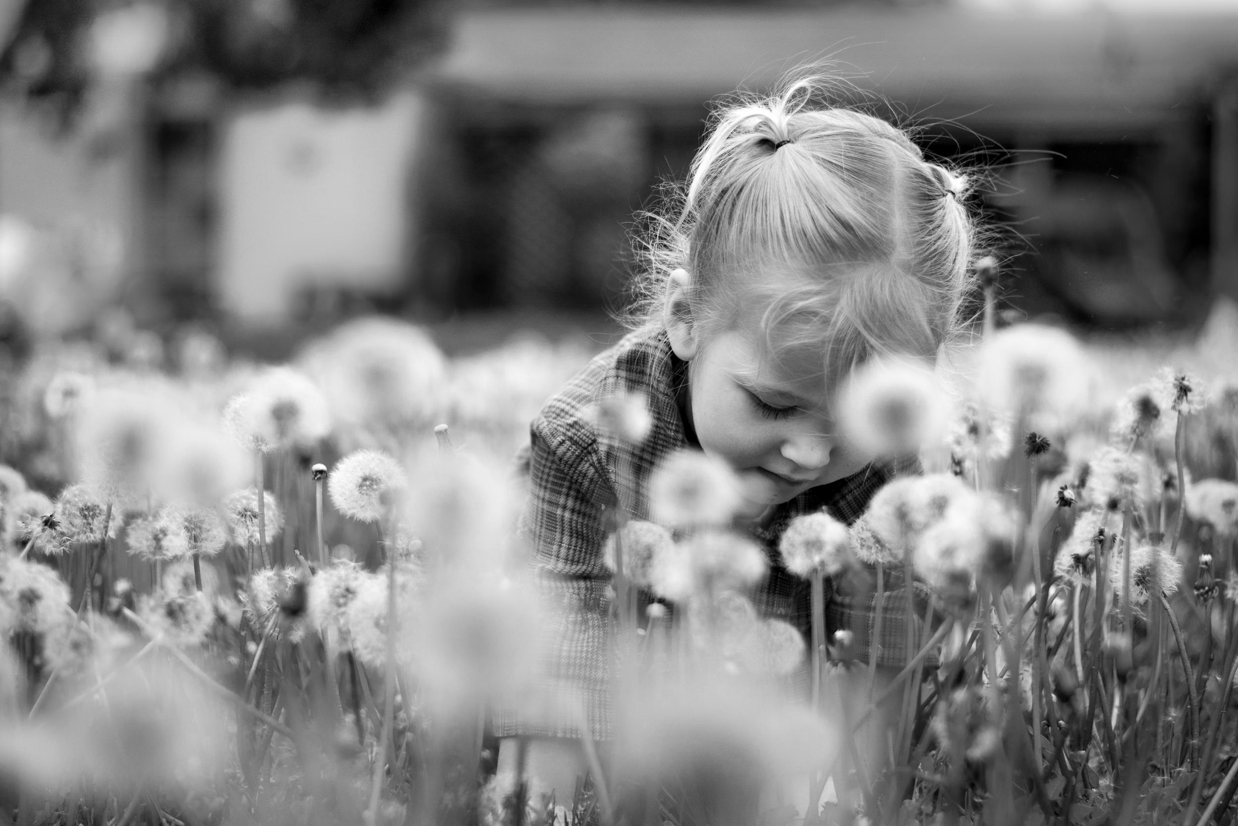 e dandelions WEB-1.jpg