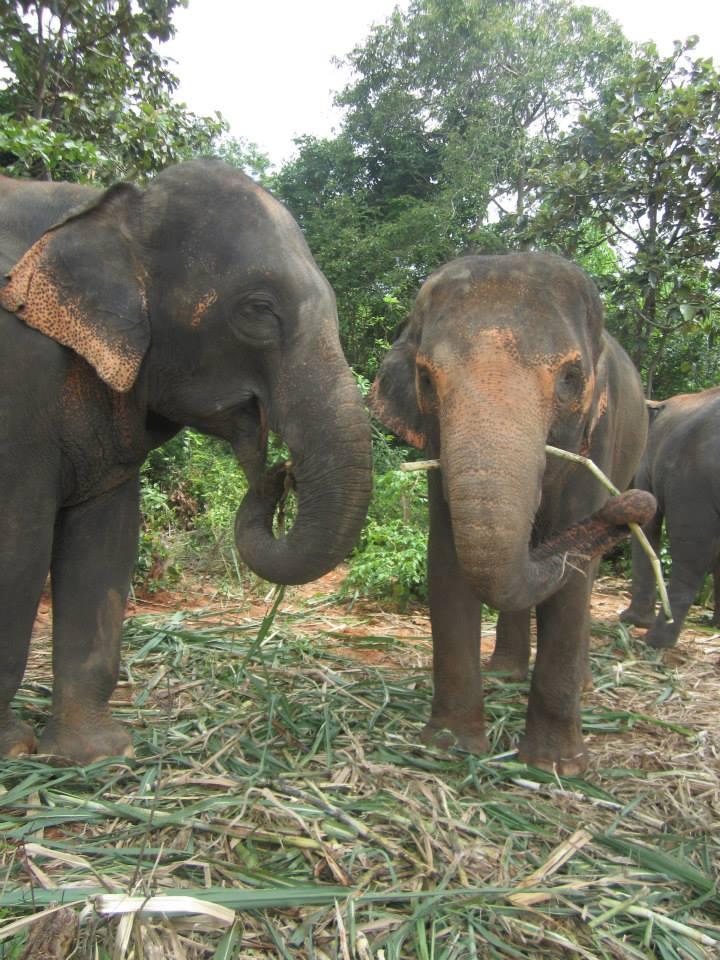 elephants2014_2.jpg