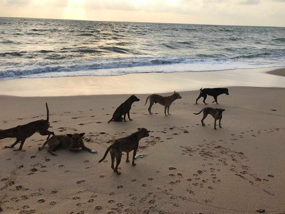 Dogs3.jpg
