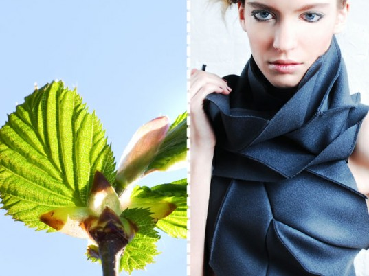 """COMPACT STRUCTURES THAT UNFURL LIKE LEAVES Diana Eng based her """"Miura Ori"""" scarf on an origami """"leaf-fold"""" pattern invented by Koryo Miura, a Japanese space scientist who was in turn inspired by the unfurling mechanism of the hornbeam and beech leaves. Diana Eng's scarf folds into a compact package yet """"deploys"""" to create a voluminous wrap for your neck. Hornbeam and beech leaves are distinguished by their corrugated folds, which remain collapsed until they emerge from their buds."""