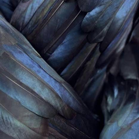 The Bird Man -