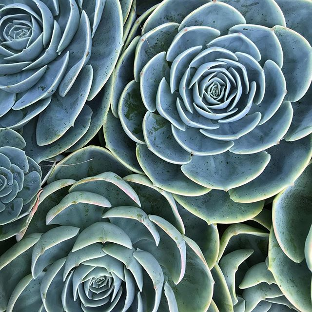 symmetry & succulents #supercombo