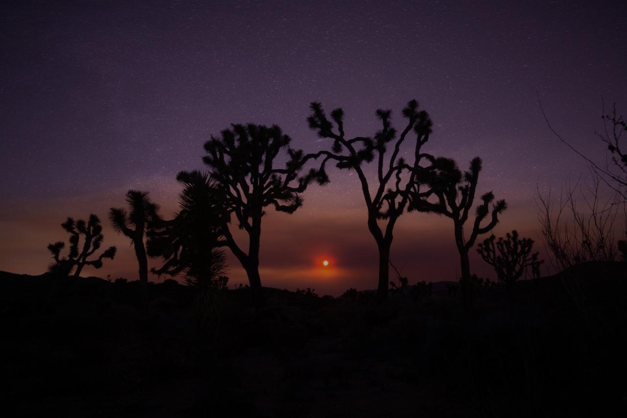 luzod-design-co-nate-joshua-tree-sunset-stars.jpg