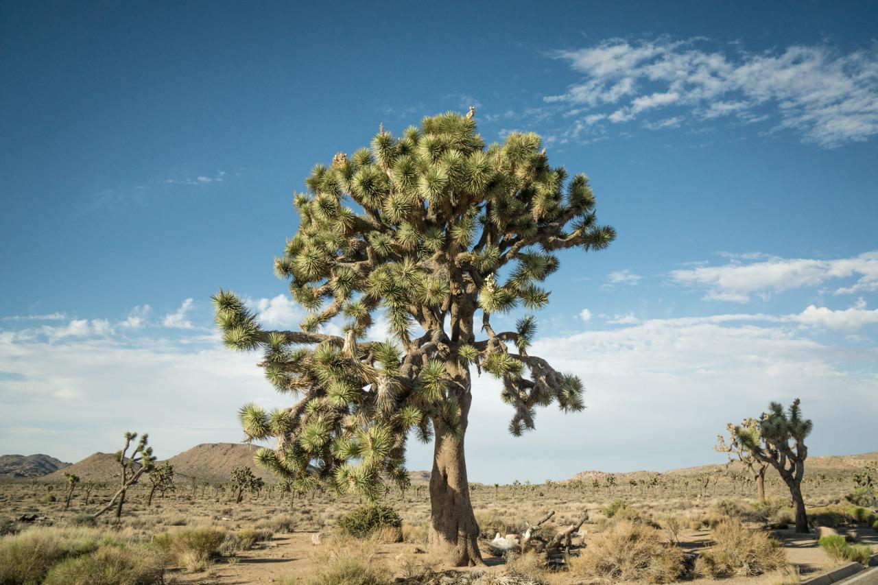 luzod-design-co-nate-joshua-tree.jpg